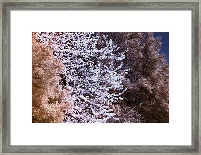 Autumnal Spring In London Framed Print