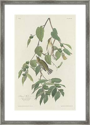 Autumnal Warbler Framed Print