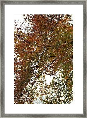 Framed Print featuring the photograph Autumn's Abstract by Deborah  Crew-Johnson