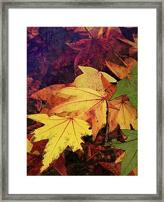 Autumns Colors Framed Print by Robert Ball