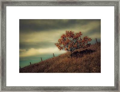 Autumns End Framed Print