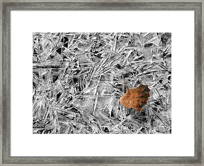 Framed Print featuring the photograph Autumn's End by Marie Leslie