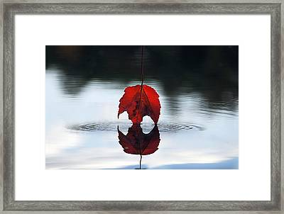 Autumns Final Descent Framed Print by William Carroll