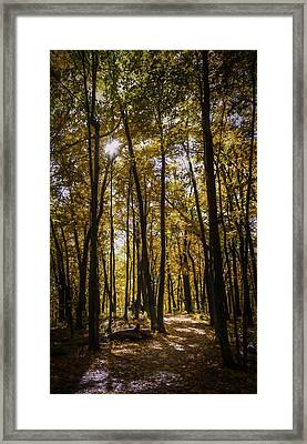 Autumns Fire Framed Print