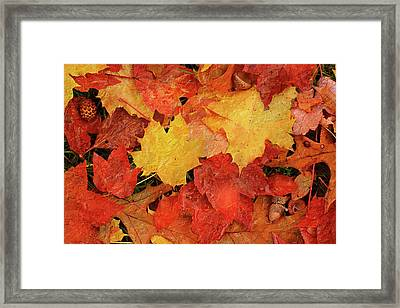 Autumns Gifts Framed Print