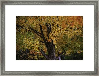 Autumns Glory Framed Print by Garry Gay