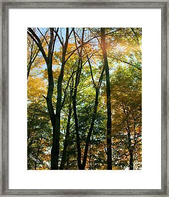 Autumns Glory Framed Print