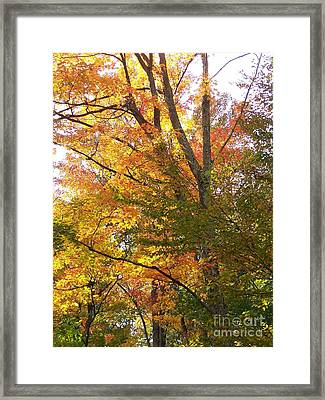 Framed Print featuring the photograph Autumn's Gold - Photograph by Jackie Mueller-Jones