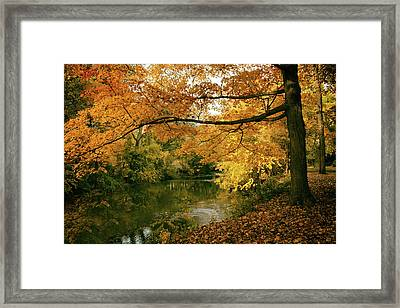 Framed Print featuring the photograph Autumn's Golden Tones by Jessica Jenney