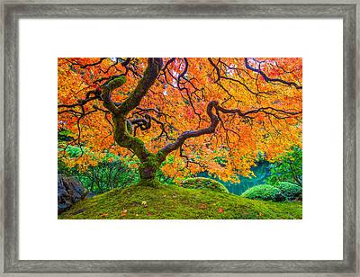 Autumn's Jewel Framed Print by Patricia Davidson