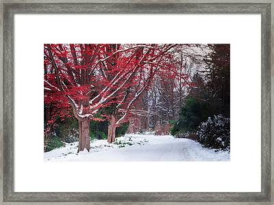Autumn's Last Kiss Framed Print