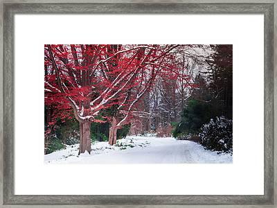 Autumn's Last Kiss Framed Print by Karen Wiles