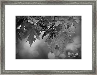Autumn's Mystery Framed Print
