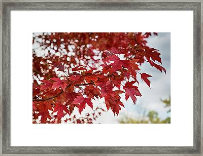 Autumns Red Framed Print by James BO Insogna