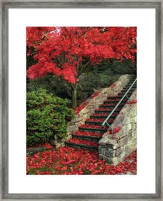 Autumn's Remains Framed Print
