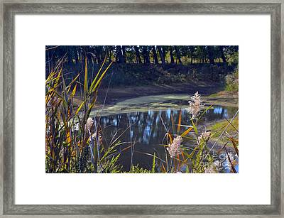 Autumn's Tranquility Framed Print by Robyn King