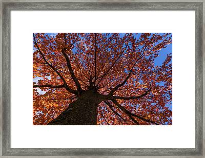 Autumns Tree New Jersey Framed Print by Terry DeLuco