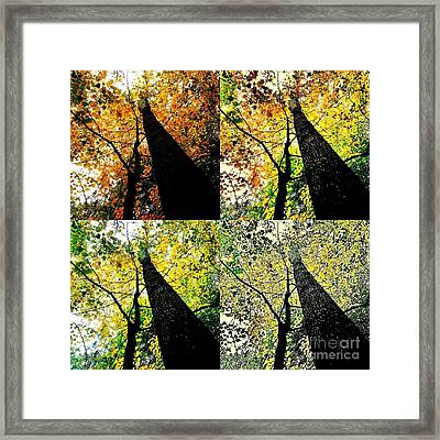 Autumns Wardrobe Change Framed Print by Scott D Van Osdol