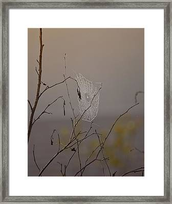 Autumns Web Framed Print by Susan Capuano