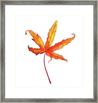 Autumt Maple Leaf Framed Print