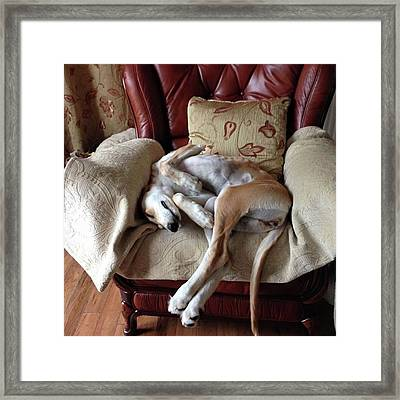 Ava - Asleep On Her Favourite Chair Framed Print