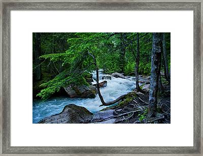 Avalanche Creek Framed Print