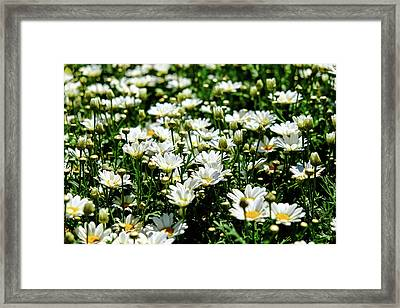 Framed Print featuring the photograph Avalanche Sun Daises by Monte Stevens
