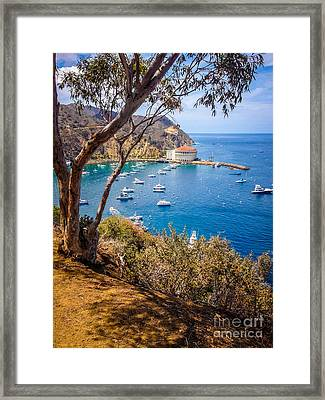 Avalon Bay Catalina Island Picture Framed Print
