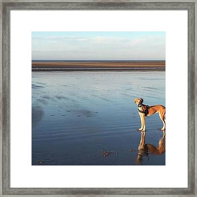 Ava's Last Walk On Brancaster Beach Framed Print