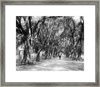 Avenue Of Live Oaks, New Orleans Ca 1910  Framed Print