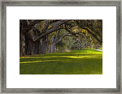 Avenue Of Oaks 2 St Simons Island Ga Framed Print