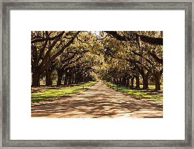 Avenue Of Oaks Boone Hall Plantation Framed Print
