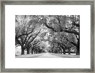 Avenue Of Oaks Charleston South Carolina Framed Print