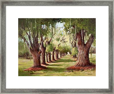 Avenue Of Oaks Iv  Framed Print