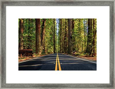 Avenue Of The Giants Framed Print by James Eddy