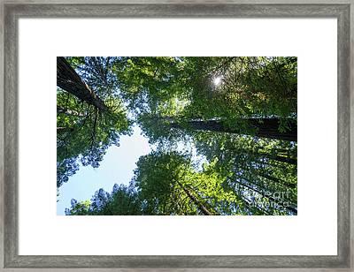 Avenue Of The Giants Redwood Trees California Dsc5460 Framed Print