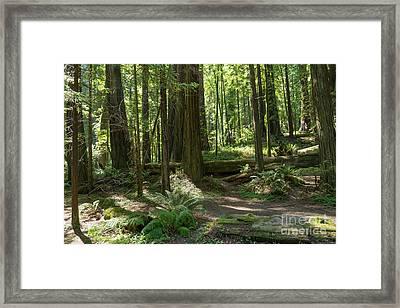 Avenue Of The Giants Redwood Trees California Dsc5467 Framed Print