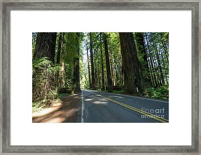 Avenue Of The Giants Redwood Trees California Dsc5472 Framed Print