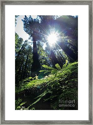 Avenue Of The Giants Redwood Trees California Dsc5517 Framed Print