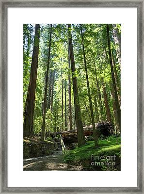 Avenue Of The Giants Redwood Trees California Dsc5533 Framed Print