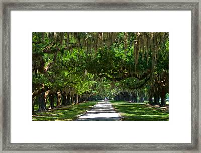 Avenue Of The Oaks At Boonville Plantation Framed Print