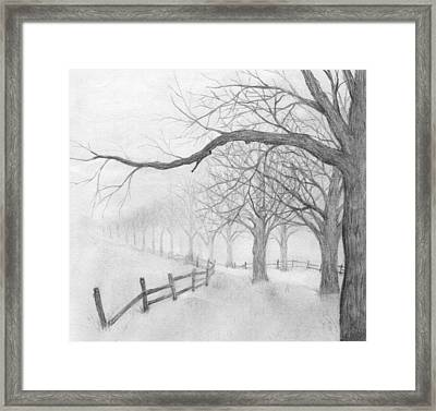 Avenue Of Trees Framed Print by Chris Hall