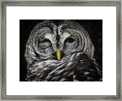 Avery's Owls, No. 11 Framed Print