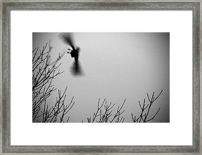 Avian Nightmare Framed Print