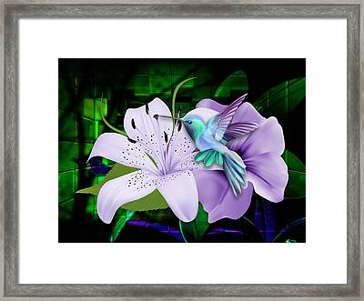 Aviation Hummingbird Framed Print