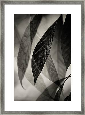 Avocado Leaves Framed Print by Bonnie Bruno