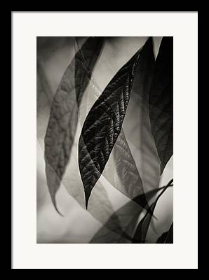 Avocado Leaves Framed Prints