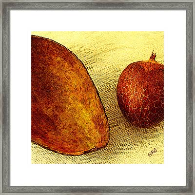 Avocado Seed And Skin II Framed Print by Ben and Raisa Gertsberg