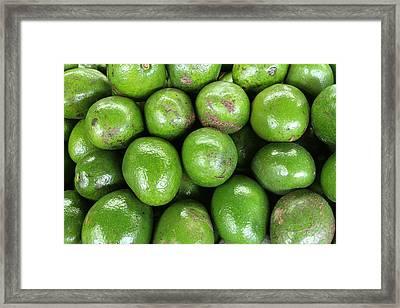 Avocados 243 Framed Print