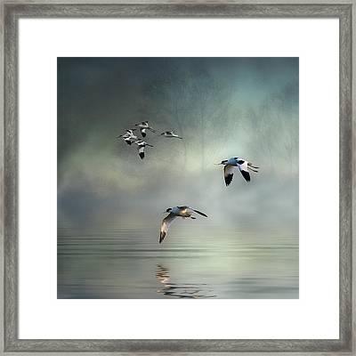 Avocet Dawn Framed Print